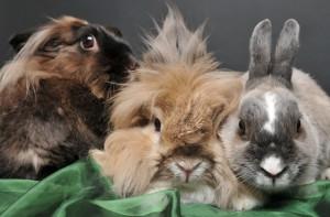 Zur Erinnerung an meine Kaninchen Nelly, Sammy, Pferdchen